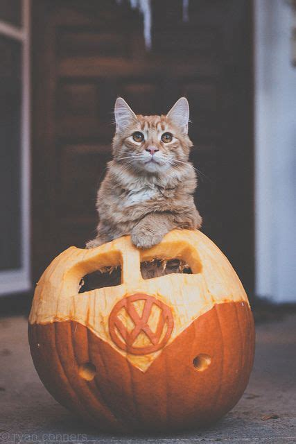 halloween cats dogs images  pinterest