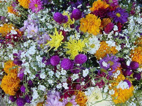 imagenes de flores de muertos flores d 237 a de muertos m 233 xico 2003 flickr photo sharing