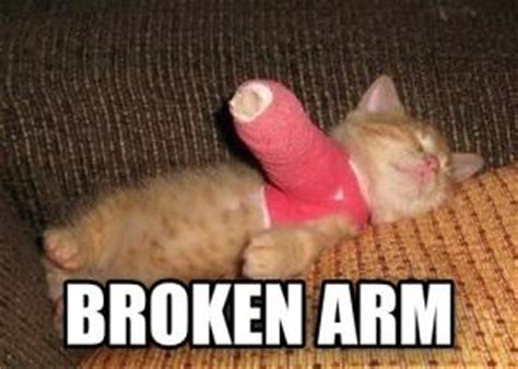 Broken Arm Meme - french bulldog jokes kappit