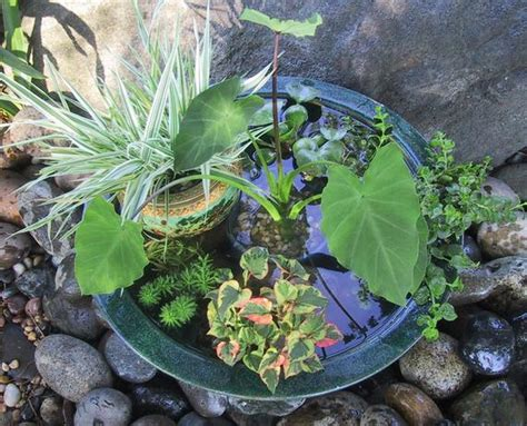 small water gardens in containers patio container water garden ideas home decorating ideas