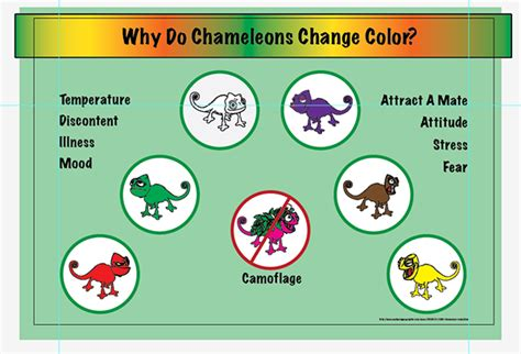 do all chameleons change color why do chameleons change color on behance