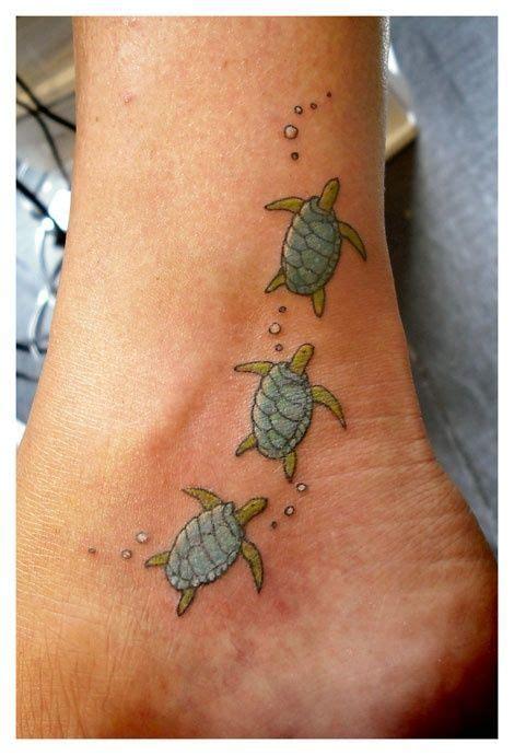 best 25 small turtle ideas best 25 small turtle ideas on turtle