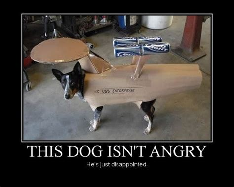 Disappointed Dog Meme - cat hunting with hound quotes quotesgram