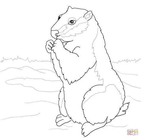 ground squirrel coloring page woodchuck coloring page free printable coloring pages
