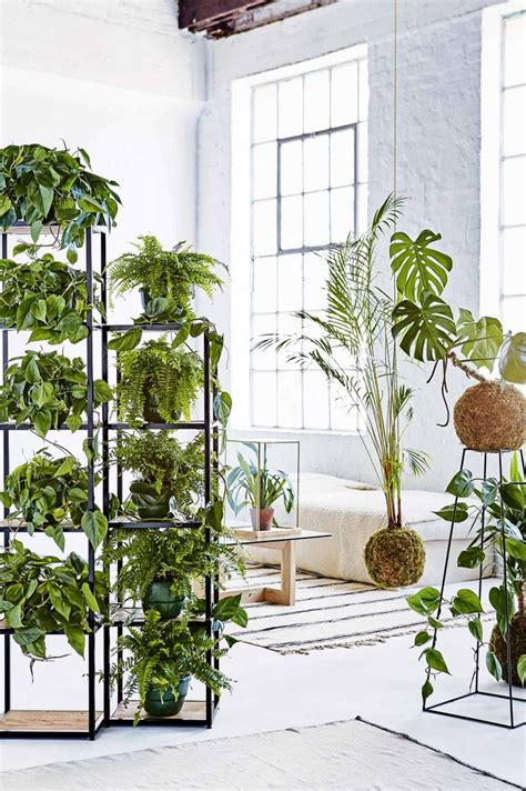 plant room divider best 25 office plants ideas on pinterest
