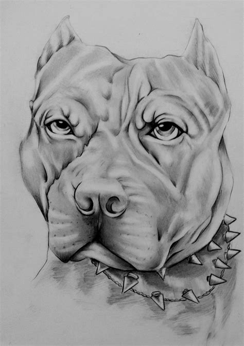 imagenes para dibujar de perros pitbull dibujo de perro pitbull pitbull drawing on pantone