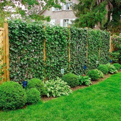 amazing privacy plants     neighbors