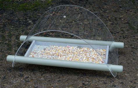 bird ground feeder