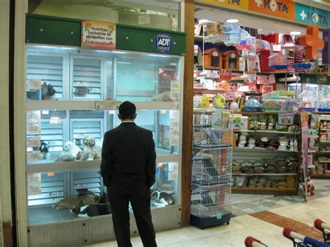 pet store commend toronto for banning the sale of dogs and cats in pet stores forcechange