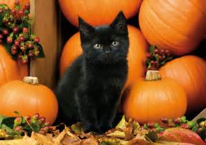 cat and pumpkin 7 signs that you are ready for fall