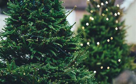 gewinne einen weihnachtsbaum f 252 rs weihnachtsfest
