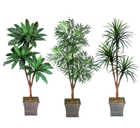Amazon Ca Gift Card Paypal - three 6 triple head artificial trees bird nest phoenix yucca with no pot