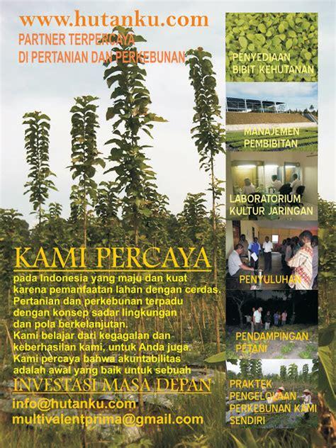 Benih Sengon Bersertifikat menyediakan bibit dan benih unggul bersertifikat untuk kbr