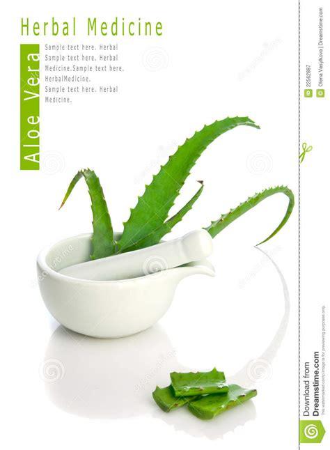 Obat Herbal Aloe Vera aloe vera herbal medicine royalty free stock photography