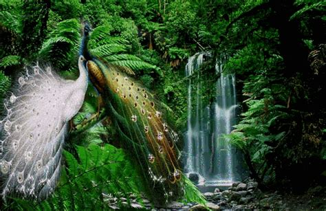 imagenes relajantes con sonido descargar imagenes de cascadas en movimiento con sonido