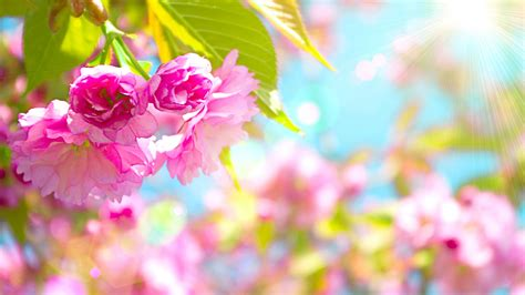 hd themes of flowers wallpapers spring flowers 2018 cute screensavers