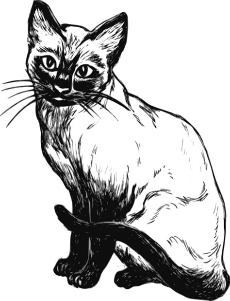 Siamese Cat Drawing Clip Art at Clker.com - vector clip ... Free Clipart Of Siamese Cats