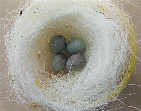 Pakan Ayam Untuk Walet gudang burung perlengkapan kandang kenari