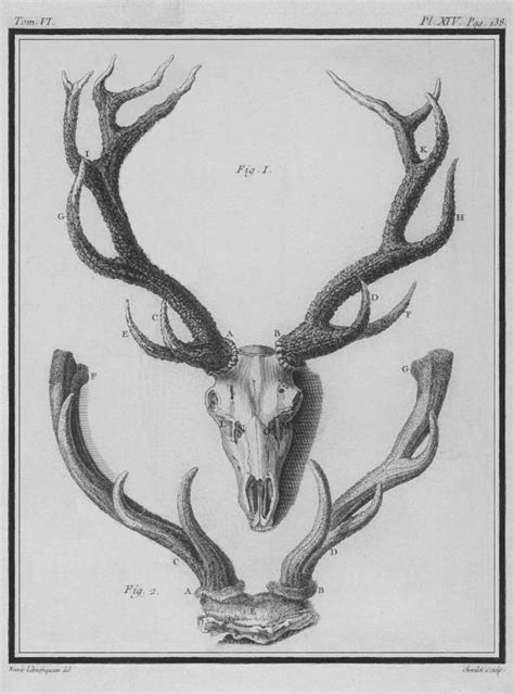 Side Cabinet file cerf bois et tete squelette stag wood and head