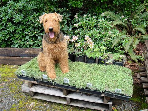 dog friendly backyard pet friendly garden design ideas jimsmowing com au