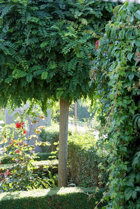 Wohnung Mit Garten Amstetten by Ein Hausbaum Passt In Jeden Garten Amstetten