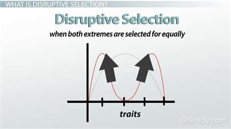 disruptive selection exle definition graph video