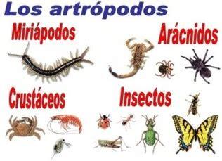imagenes animales artropodos info agro clasificacion de los artropodos