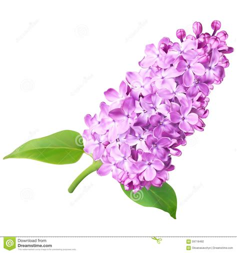 lilac flowers stock illustration illustration of inlay