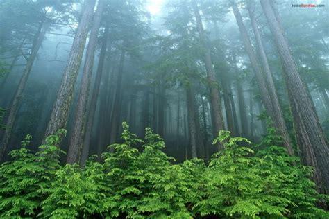 en un bosque muy un bosque de 225 rboles muy altos 3919
