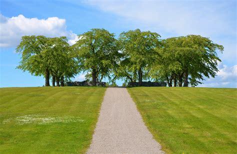 gambar pemandangan pohon cahaya struktur menanam