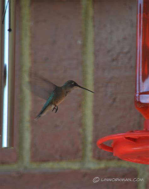 top 28 why did hummingbirds stop coming to feeder what