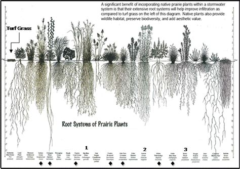 vegetable root depth city of elgin illinois official website plantings