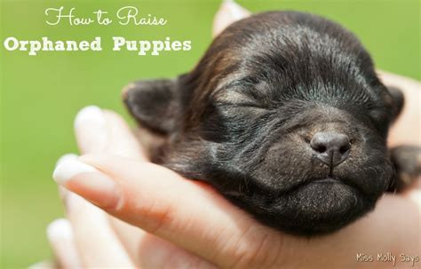 orphaned puppies how to raise orphaned puppies miss molly says