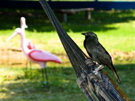 Bird Hammock kingfisher in pantanal journey