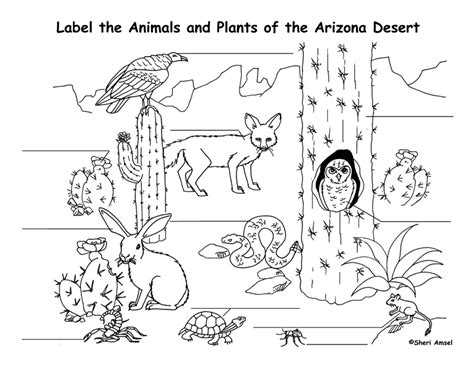 desert coloring pages for kids az coloring pages arizona desert animals and plants coloring page az