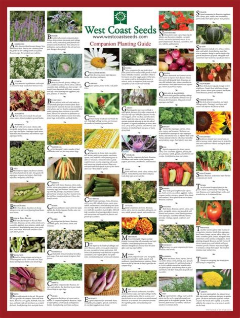 Companion Flowers For Vegetable Garden Companion Planting Guide