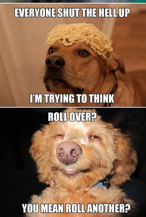 Internet Dog Meme - the best of the high dogs memes craveonline