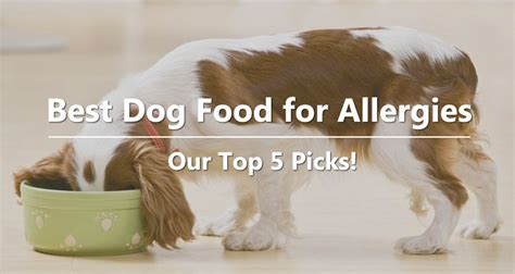 food for dogs with allergies best food for allergies our top 5 picks