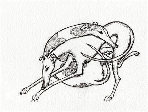 greyhound tattoo designs whippet greyhound tattoos ideas