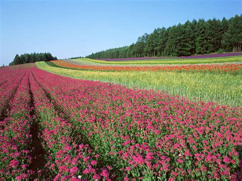 world most beautiful nature wallpaper wallpapersafari most beautiful nature wallpaper flowers wallpapersafari