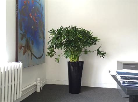 best plants for an office best indoor plants for office in india plants for office