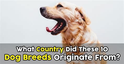 what country do pugs come from what country did these 10 breeds originate from quizpug