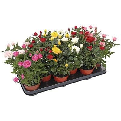Landi Garten Pflanzen by Zimmerpflanzen Landi