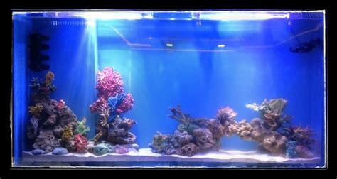 aquarium design mumbai acrylic aquarium in residence