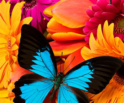 colorful butterfly colourful butterfly wallpaper for android live wallpapers