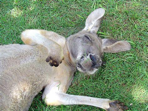 imagenes animales durmiendo la curiosa forma de dormir de algunos animales 2 170 parte