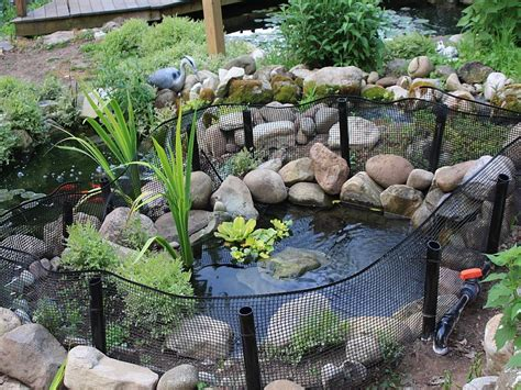 backyard tortoise outdoor turtle pond i d love to get my guys out of the