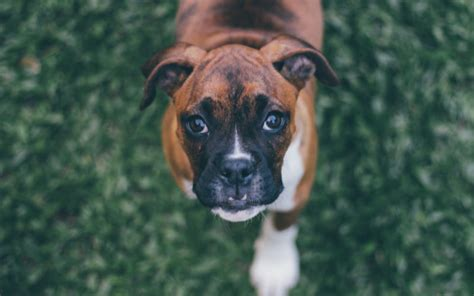 types of seizures in dogs types of seizures in dogs canna pet