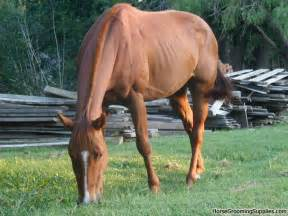 Horses For Sale In Tx Cheap Barrel Horses For Sale In
