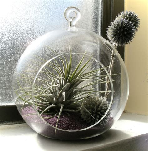 kitchen window terrarium 26 best images about glass terrarium collections on